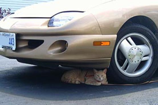 gato debajo de un coche