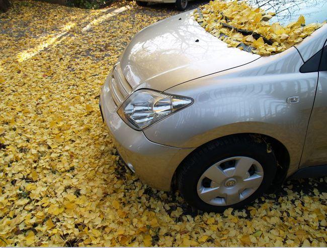 Conducir en otoño con seguridad